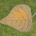 Poplar Leaf Stepping Stone Image