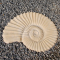 Fossil Stepping Stone - Cast Stone