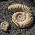 Cast Stone Fossil Sculptures